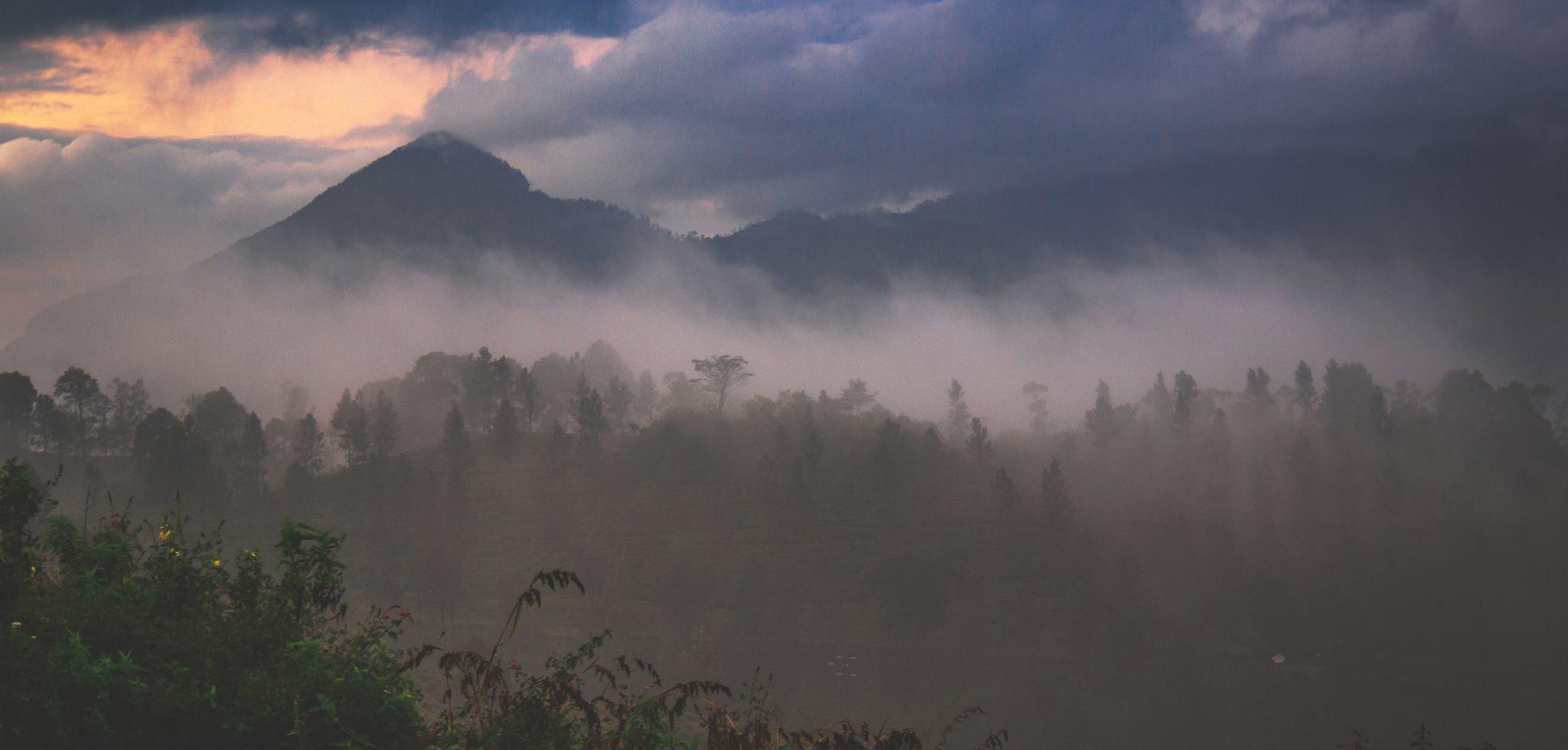Sri Lanka'nın muhteşem doğası ve meşhur çay tarlaları