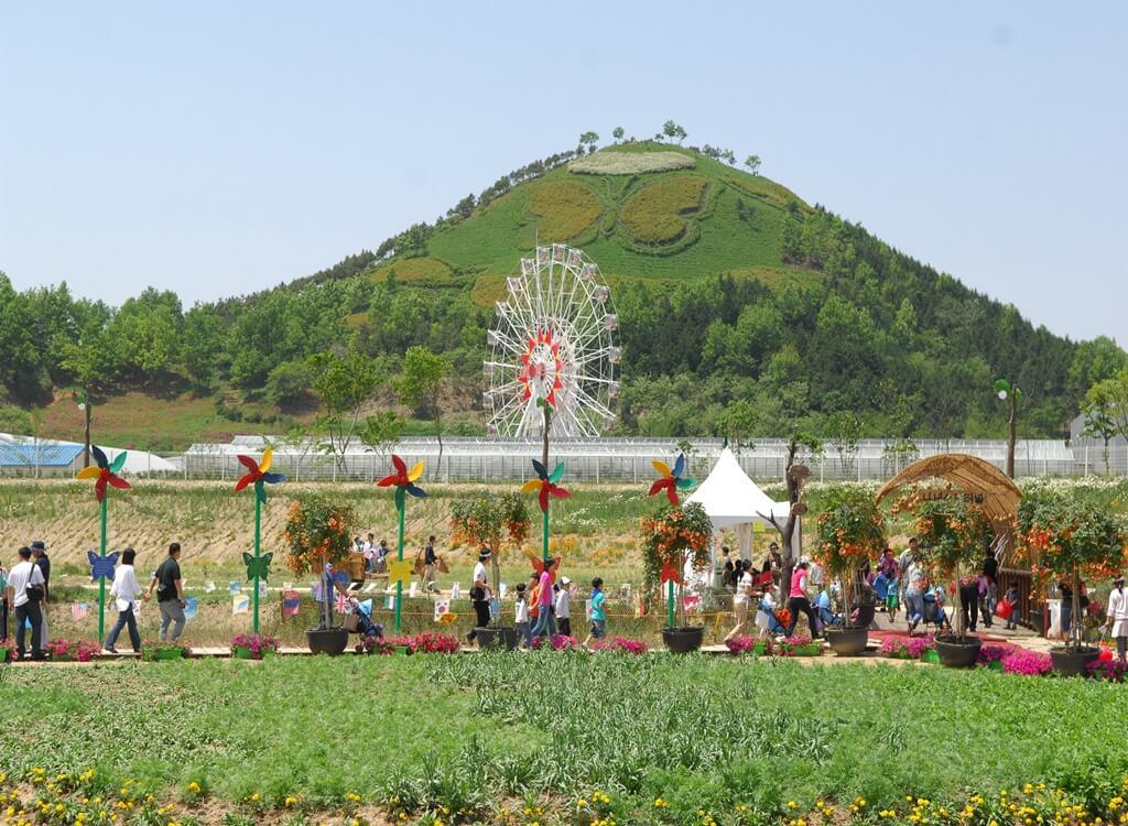 Hampyeong Kelebek Festivali