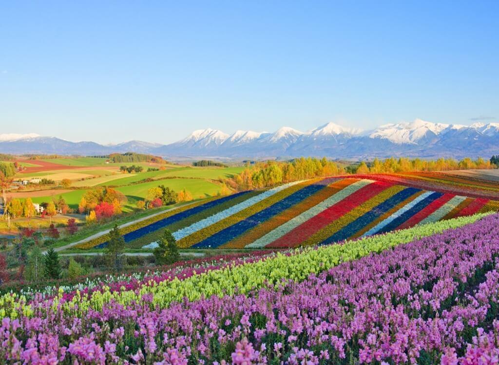 Hokkaido Lavanta Bahçeleri