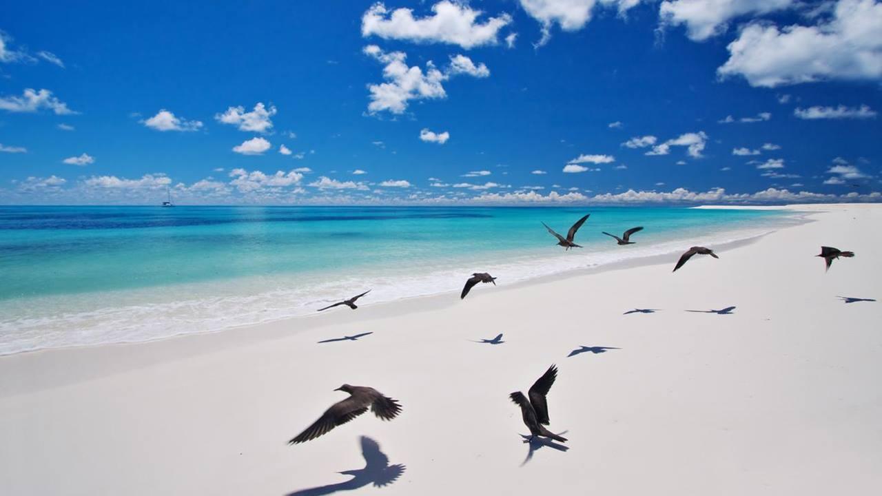 Seyşeller Plajları - Bird Island