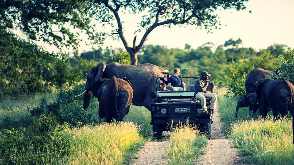 Kruger Milli Parkı