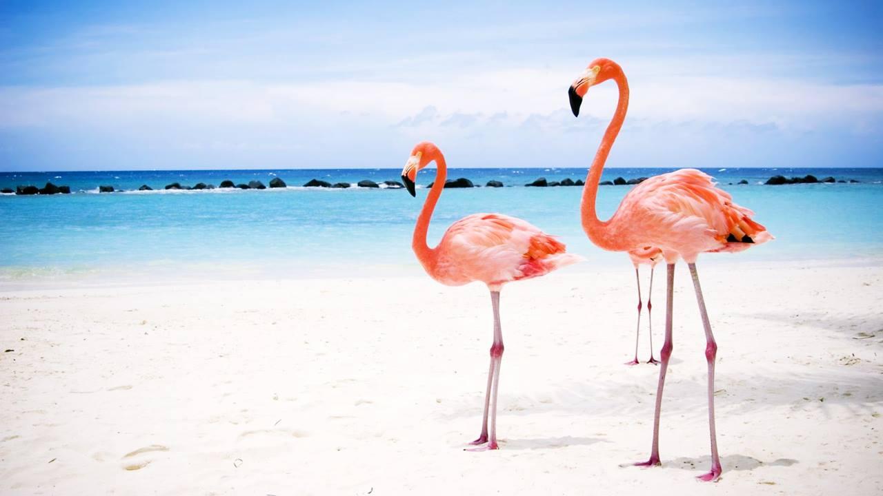 Küba Plajları: Cayo Coco