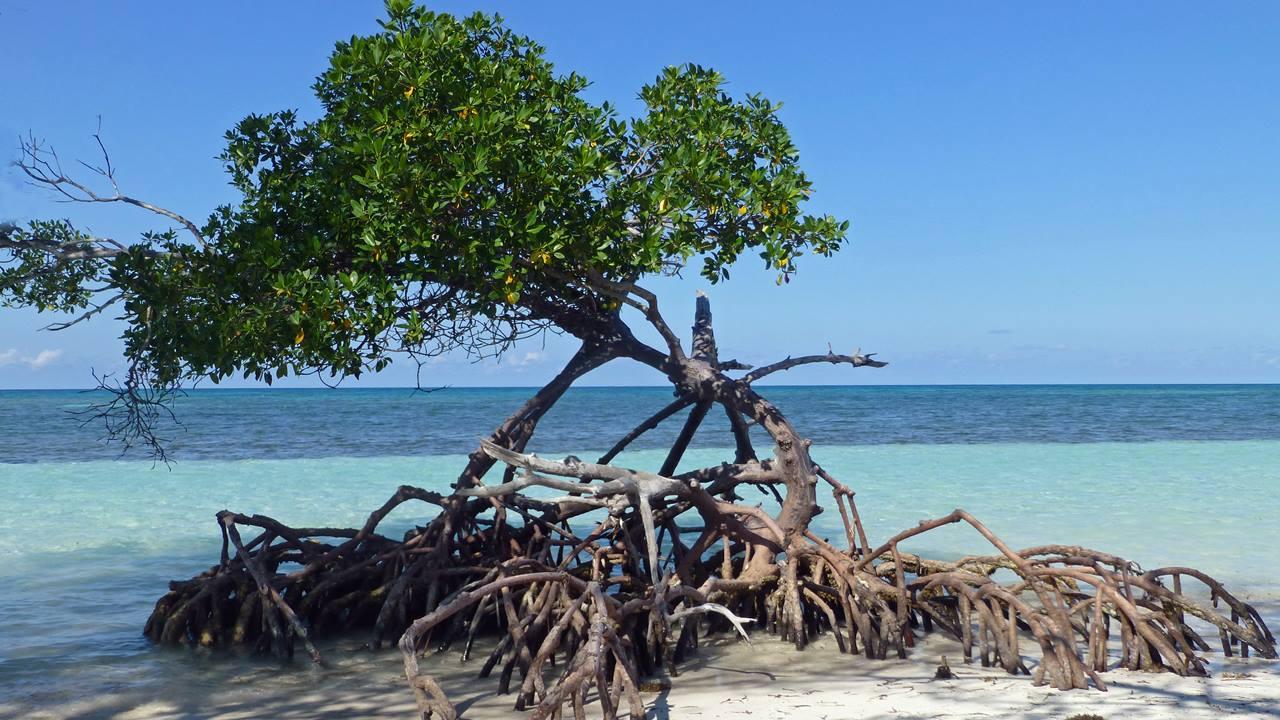 Küba Plajları: Cayo Jutias