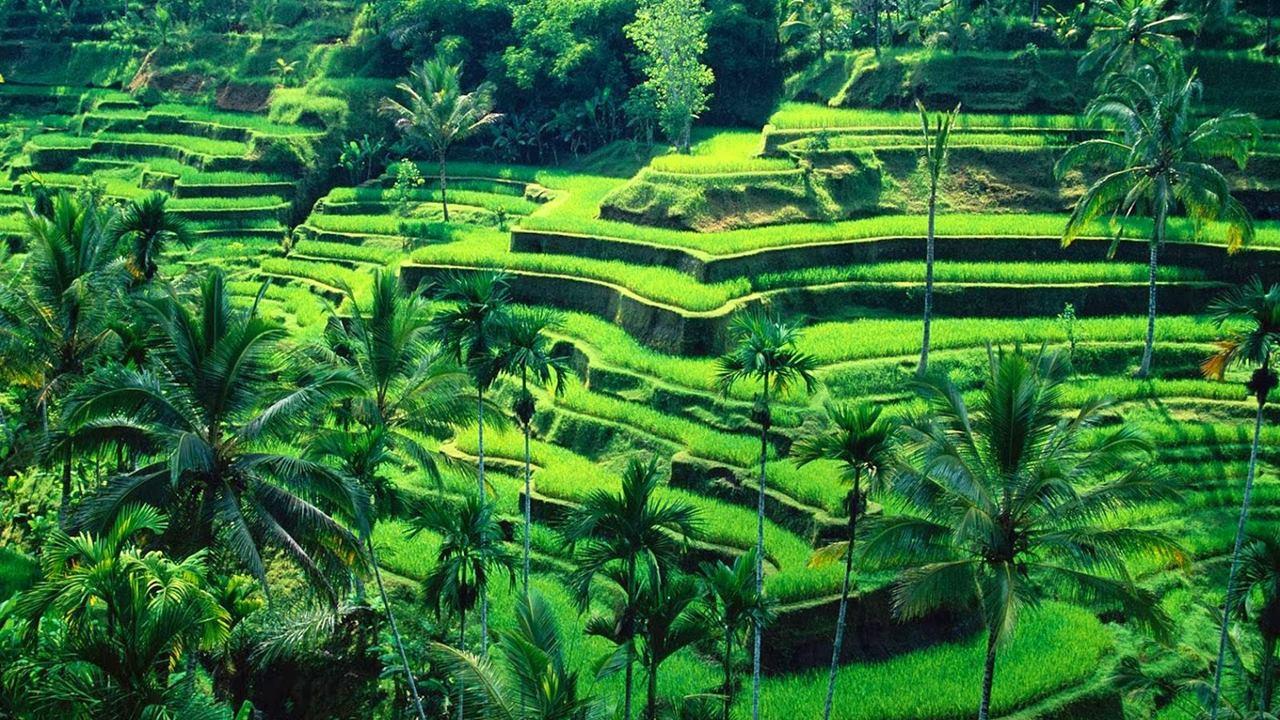Bali Gezilecek Yerler: Ubud